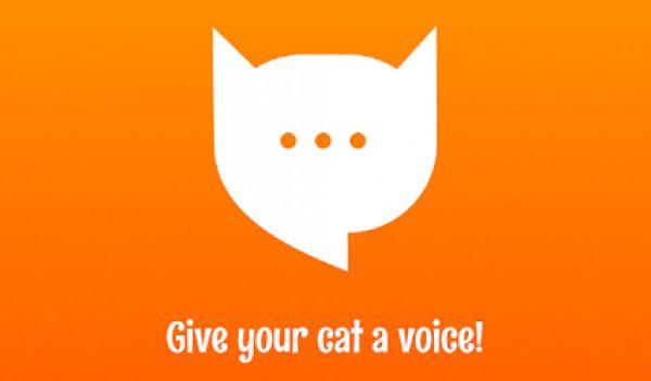 MeowTalk Beta — Переводчик с кошачьего.