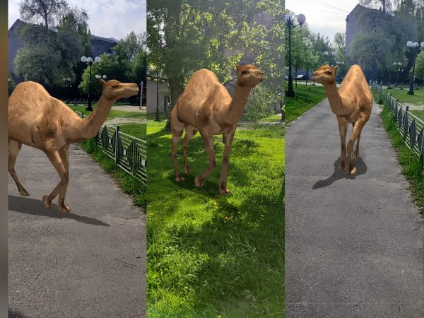 Разработка в дополненной реальности: верблюд(AR)